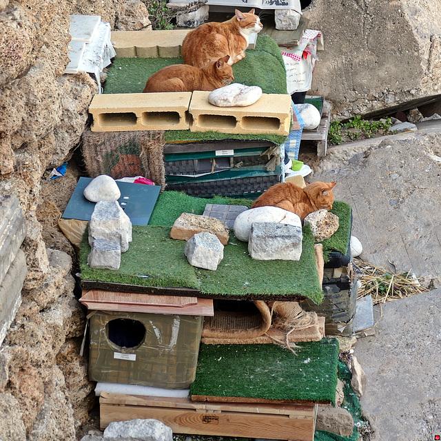 Sozialer Wohnungsbau für Streuner...