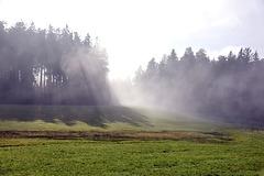 zwischen Sonne und aufkommendem Nebel