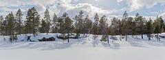 By Lake Kuoppajärvi in April