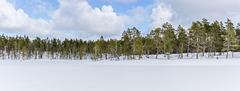Vätsäri wilderness in April