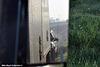 abf frt frtlnr cascadia dbls mirror shot smokey bear ca sr99 kingsburg ca 01'19