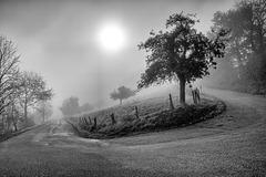 Herbstsonne - A Milky Fall Sun - HFF (135°)