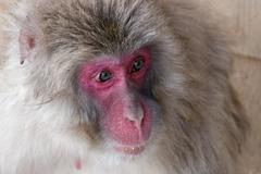 Iwatayama, la montagne aux singes (2)