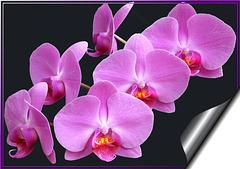 Reiche Blütenpracht... ©UdoSm