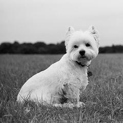 Fergus (2)