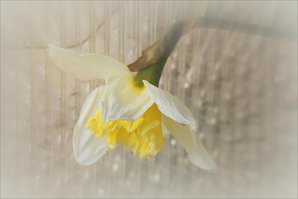 Une fleur par jour.... - Page 4 41361406.0f18a4be.1024