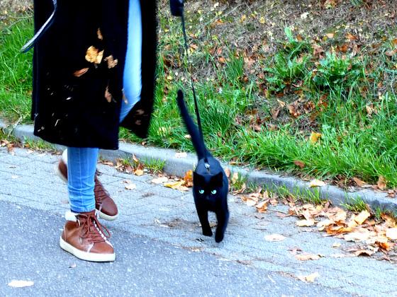 Toestemming van de kat....