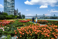 United Nations Headquarters - gardens - 1986