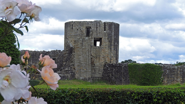 Roses at Barnard Castle