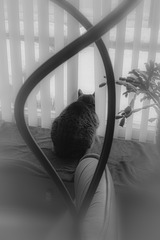 Cat, Through Lampstand, in Window
