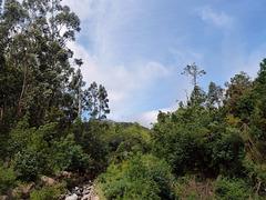 Im Tal von Ribeira Frio