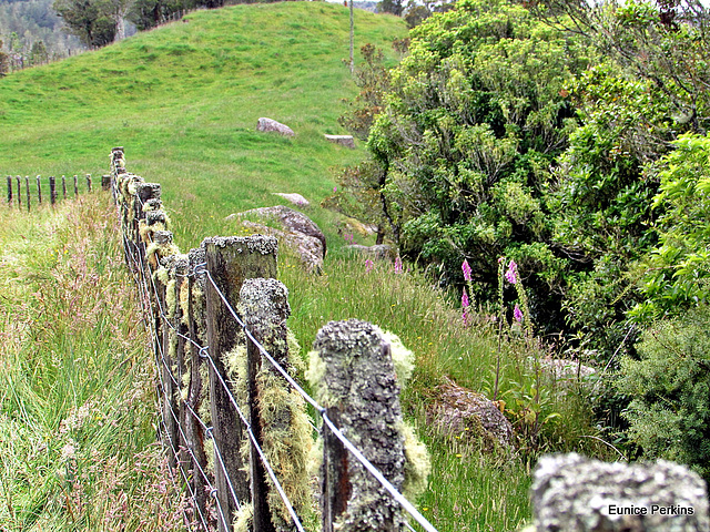All Along the Fence Line.