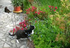 Lulu, Bambi et Fleur