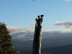 Kea On Takaka Hill Nelson New Zealand