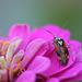 Explored - Interessantes Insekt