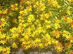 Blüten - floroj
