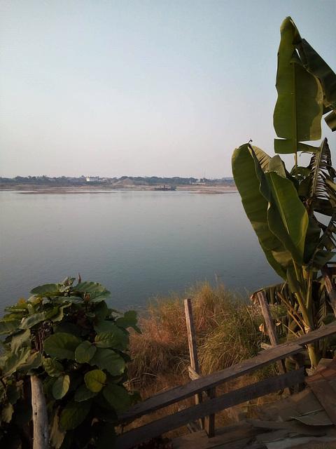Mekong's vegetation / Végétation riveraines du Mékong