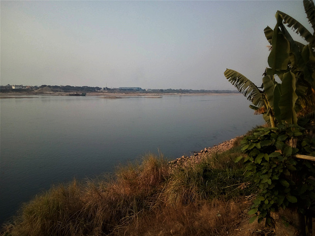 Végétation riveraines du Mékong / Mekong's vegetation