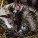 April 1st: First lamb