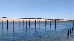 Poteaux aquatiques / Aquatic poles