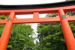 Un des 30 000 torii du sanctuaire de Fushimi Inari (temple shinto), Kyoto (Kansai, Japon)