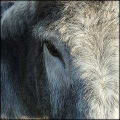 Je ne suis pas un cheval...!
