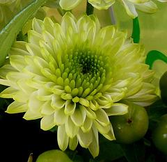 Vert espérance / Green like hope