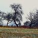 Winterruhe - Winter rest