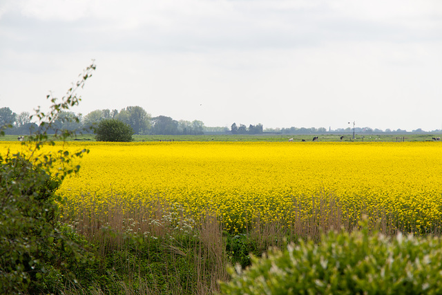 05-29 Gelb ist eine Farbe