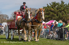 Working and Heavy Horse Show