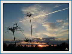** Un beau soir le soleil allait se coucher .... **