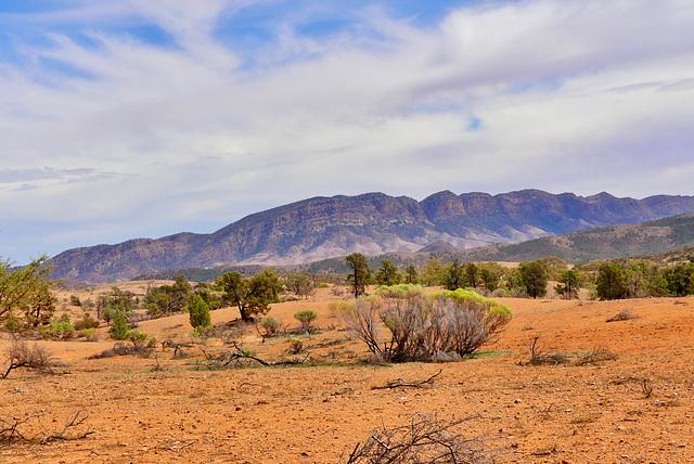 P1270280-  Rando Trezona - Flinders Ranges.  08 mars 2020