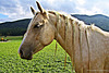 pretty horse hairdo