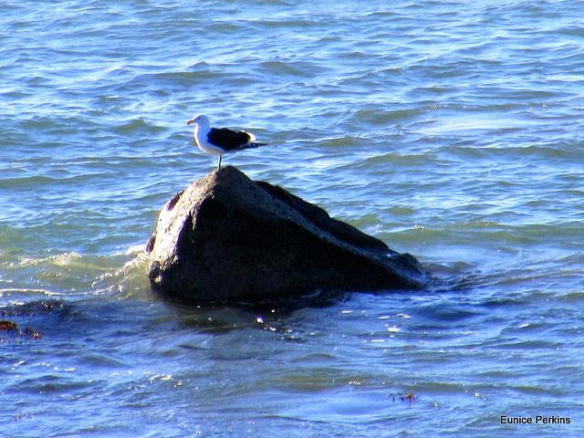 Seagul Enjoying The Sun,