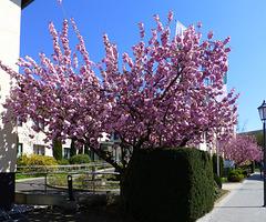 Frühling in Bad Neuenahr