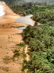 coconut grove1
