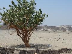 Ägypten, Arabische Wüste,  süd-ost