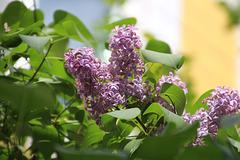 Весна, надежды... Spring Hope ...