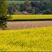 Yellow Cross Yellow