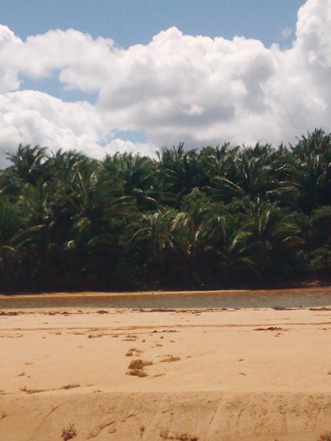 coconut grove3