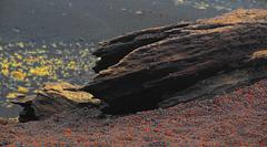 Lavafelsen auf rotgrauer Asche
