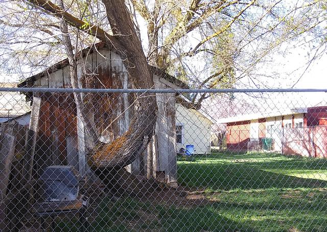 Tree swoop