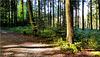 Neulich im Wald.