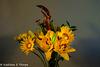Oriental Lily and Okra Arrangement Artistic 092816-001