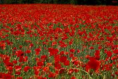 Un tapis de rouge
