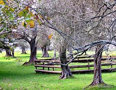 In An Auckland Park.