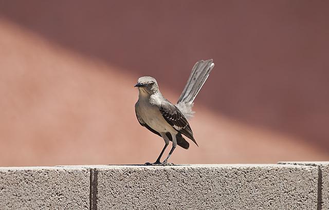 Angry Bird #2