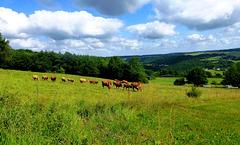 DE - Altenahr - Gottfried Kinkel Trail
