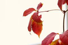 1 (6)...austria autumn herbst