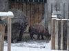 Mama geht - Nashörnchen im Schnee I (Wilhelma)